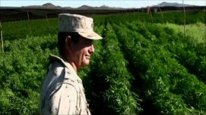 """Clandestine"" marijuana field in Baja Calfornia.  Photo:  BBC"
