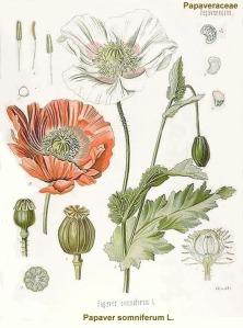 opium025
